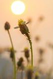 放牧与浅景深的花选择聚焦 库存图片