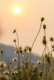 放牧与浅景深的花选择聚焦 库存照片