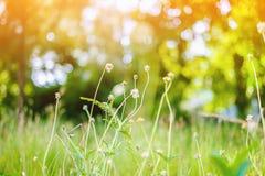 放牧在绿色领域的花与阳光 库存图片