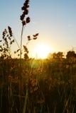 放牧天空日落城市领域龙头风景森林云彩绿叶平静平静野餐自然 库存图片