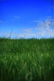 放牧天空 库存图片