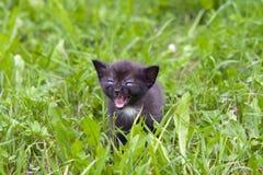 放牧小的小猫 库存照片