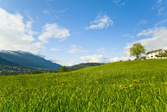 放牧平安的小山 免版税图库摄影