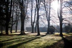 放牧看起来金刚石在阳光下发出光线,早晨雍容 库存照片