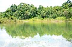 放牧石渣绿色横向沼泽北部ribe路海运 库存图片