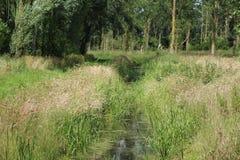 放牧石渣绿色横向沼泽北部ribe路海运 免版税库存图片