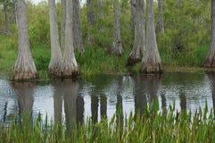 放牧石渣绿色横向沼泽北部ribe路海运 免版税图库摄影
