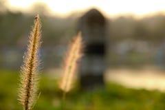 放牧花 库存照片