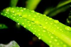 放牧雨珠 图库摄影
