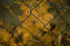 放牧黄色室外叶子特写镜头宏观纹理摘要bokeh的背景 库存照片