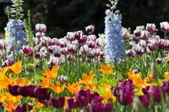绽放的多彩多姿的郁金香庭院 库存照片