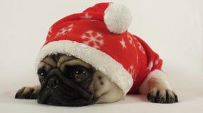 放置与圣诞老人服装的哈巴狗 库存图片