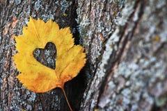 放置反对树的吠声的黄色秋天叶子 免版税库存图片