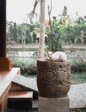 放置在一个大农场主的白色猫在热带庭院里 免版税图库摄影