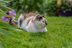 放置在与花的绿草的美丽的杂色猫宏指令  免版税库存照片