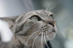 放置在台阶的猫 免版税库存图片