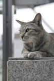 放置在台阶的猫 图库摄影