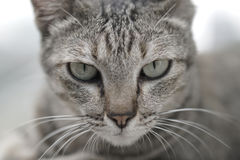 放置在台阶的猫 库存照片