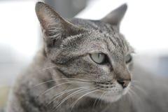 放置在台阶的猫 免版税库存照片