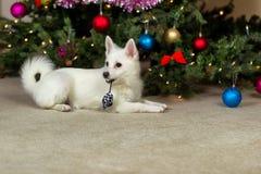 放置在圣诞树前面的愉快的小狗在hol期间 免版税图库摄影
