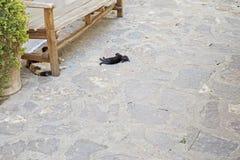 放置在地板的小的黑小猫 免版税库存照片