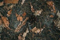 放置在棕色地面的一个小,黄色叶子和锥体 免版税库存图片