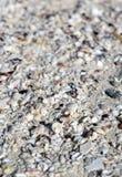 放置在沙子宏指令射击的大相当数量壳 免版税库存照片
