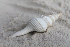 放置在沙子的螺旋海壳 库存图片