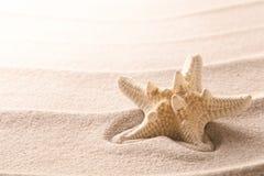 放置在海滩沙子的一个热带海星 免版税库存图片