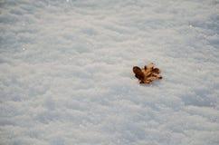 放置在积雪的地面上的一片唯一橡木叶子 免版税库存照片