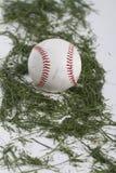 在草的棒球在上面演播室 免版税库存照片