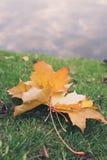 放置在草的小组五颜六色的秋叶通过与copyspace的水背景您的文本的 免版税库存照片