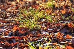 放置在草的秋叶 库存照片