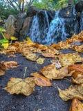 放置在路面的秋天叶子 库存图片
