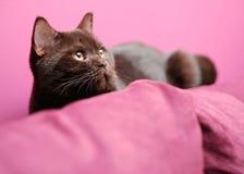 放置在长沙发的懒惰猫 库存图片
