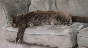 放置在长沙发的猫 免版税库存图片