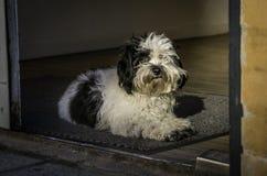 放置在门道入口的小狗 免版税库存照片