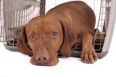 在条板箱的狗 免版税图库摄影