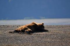 放置在他的边的睡觉熊在阳光下 免版税图库摄影