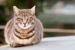 放置坐的猫 免版税库存照片