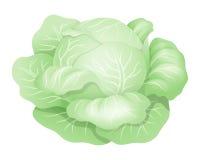 放置白色的圆白菜 免版税库存图片