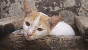 放置的猫装配日志 影视素材