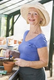 放置种子妇女的温室罐 库存图片