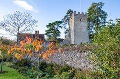 教会树和墙壁有植物的 免版税库存图片