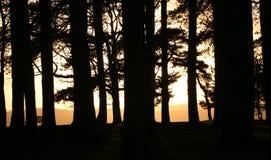 教务长夜间森林 免版税图库摄影