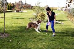 教澳大利亚牧羊人室外公园家谱的驯狗师取指令戏剧关系室外公园实践专业经理 免版税库存照片