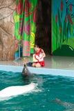 教练员讲话与海豚的在dolphinarium 库存照片