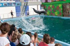 教练员讲话与海豚的在dolphinarium 库存图片