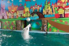 教练员讲话与海豚的在dolphinarium 免版税库存照片