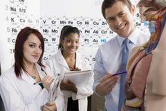 教育在人的解剖学的老师 免版税库存图片